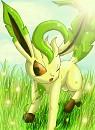 Folipurba im Gras