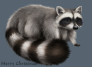 It's a raccoon