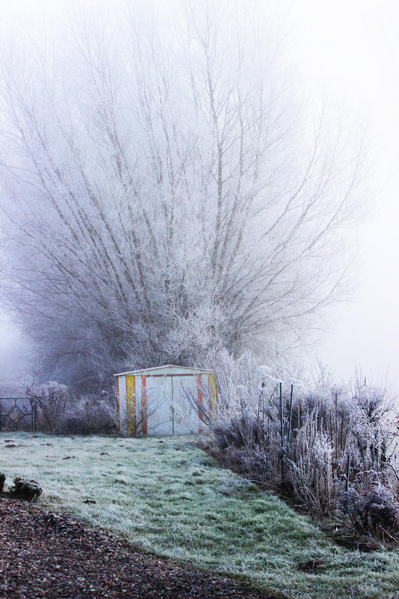 Foto: *Tiefgründiger künstlerischer Bildtitel meines Gartens*