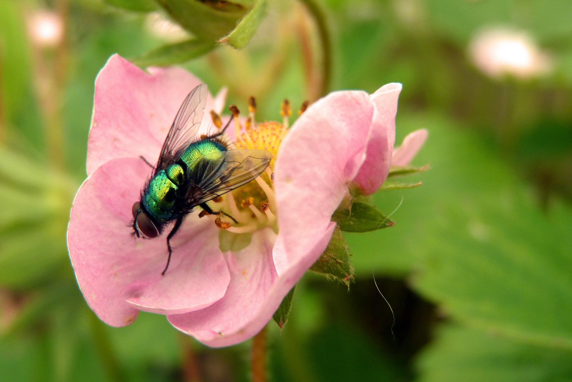 Foto: Der Frühling macht die Fliege