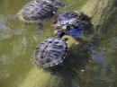 Foto der Woche #010: Schildkröten