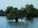 Foto der Woche #012: Donaubaum