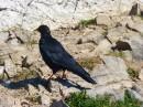 Foto der Woche #017: Schwarzer Vogel von rechts