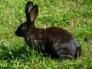 Foto der Woche #019: Schwarzes Kaninchen von... im Liegen?