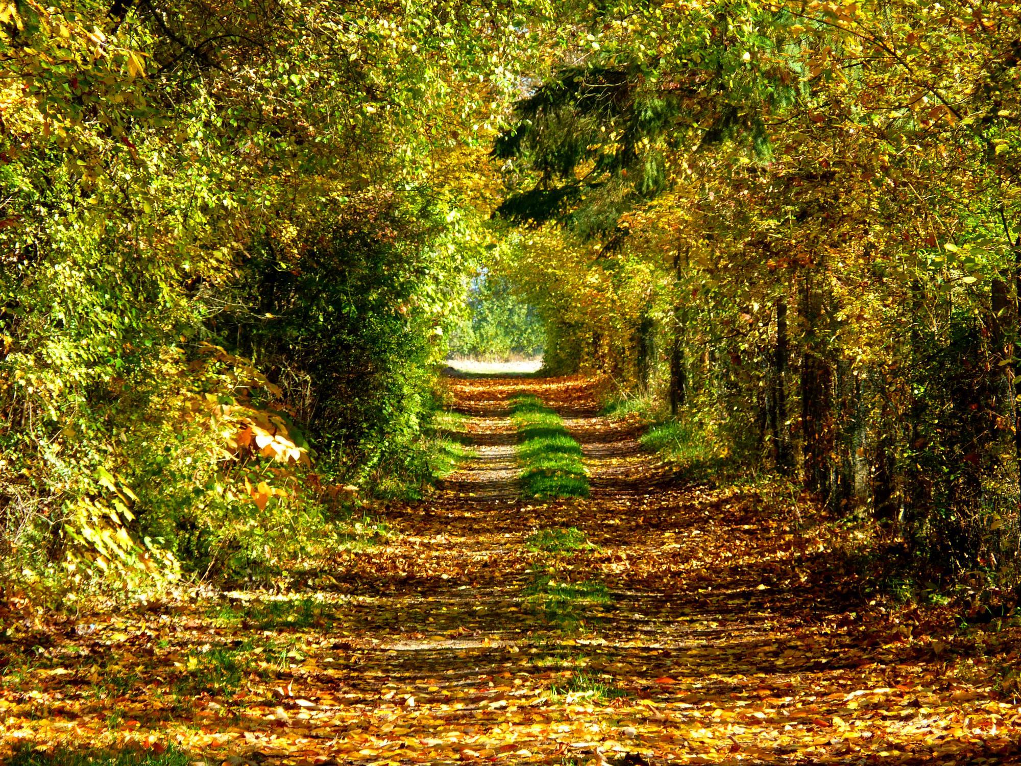 Foto: Foto der Woche #023: Herbstallee