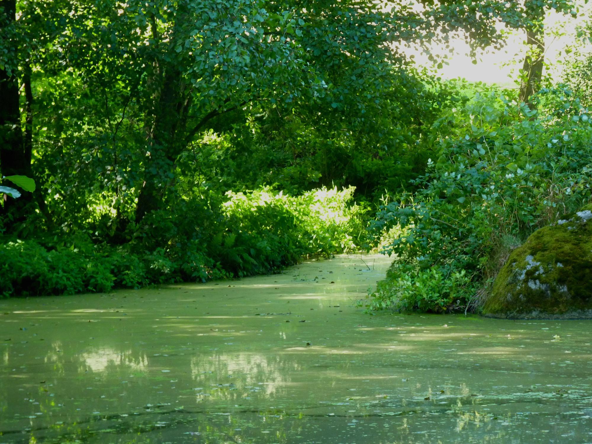 Foto: Foto der Woche #024: Sumpfähnliches Gewässer