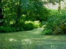Foto der Woche #024: Sumpfähnliches Gewässer