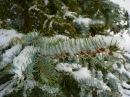 Foto der Woche #035: Weiße Weihnachten!