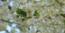 Foto der Woche #047: Es ist Frühling!