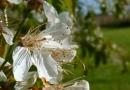 Foto der Woche #049: Die letzten Blüten