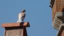 Foto der Woche #063: Toskana-Taube