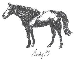 Pokémon-Zeichnung: Pferde Versuch