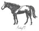 Pferde Versuch