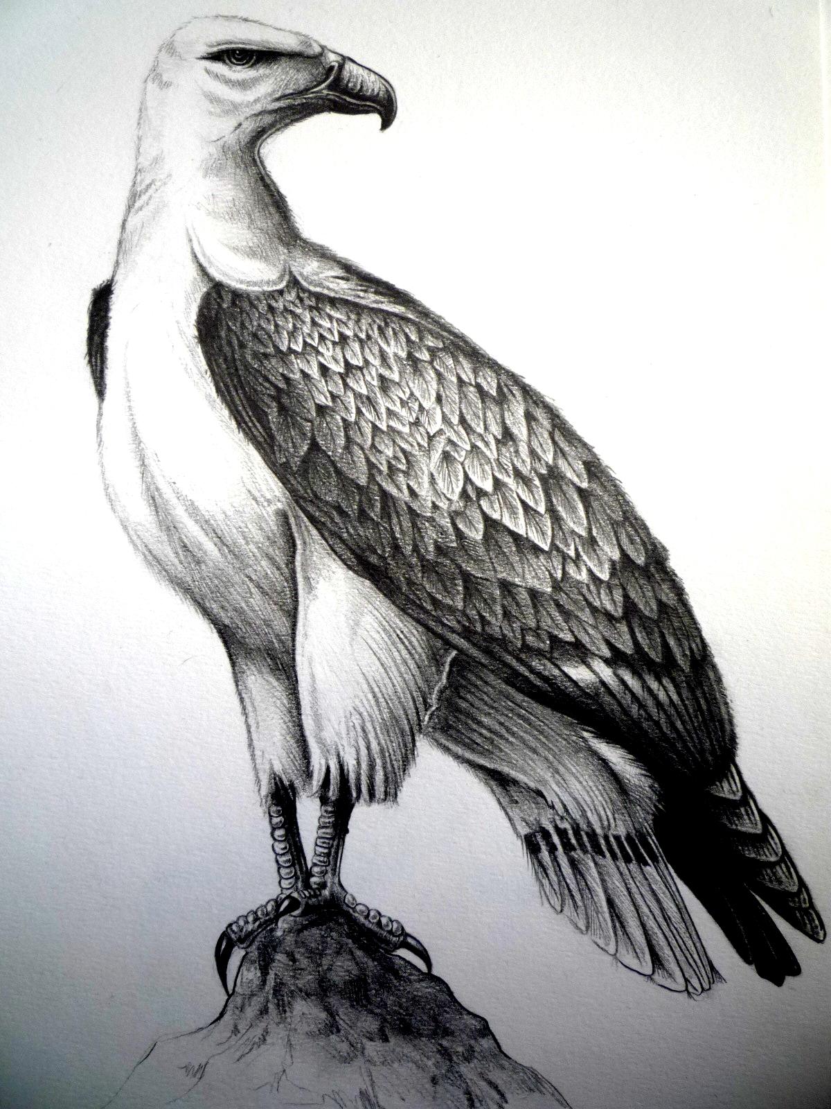 Pokémon-Zeichnung: Seeadler