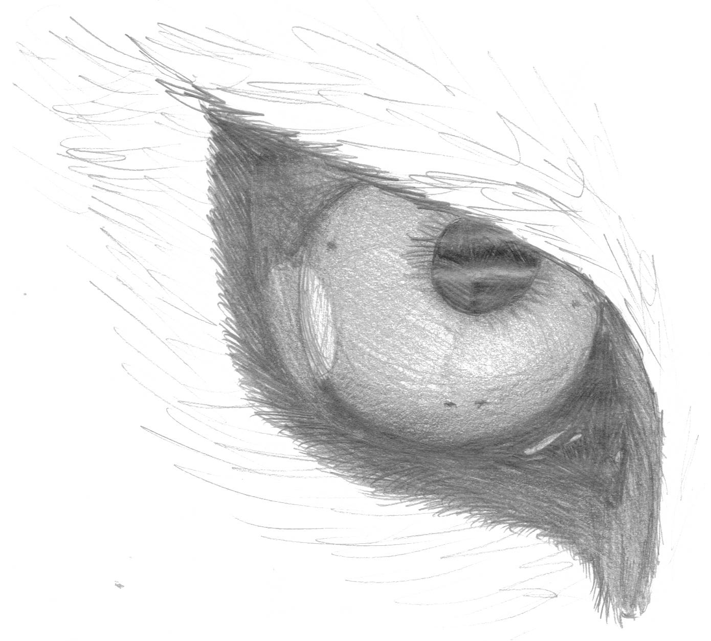 Zeichnung Eye Of The Tiger Xdd Pokémon Fanart