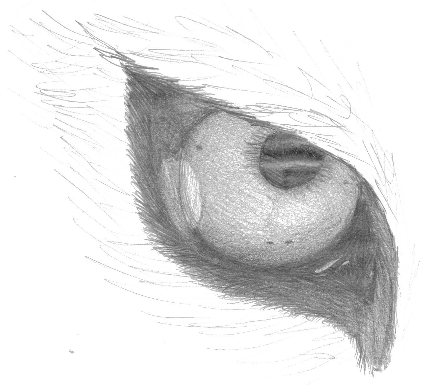zeichnung eye of the tiger xdd pok mon fanart. Black Bedroom Furniture Sets. Home Design Ideas