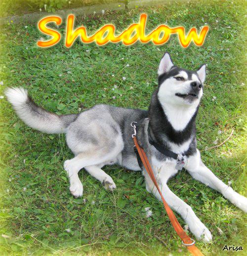 Foto: Shadow