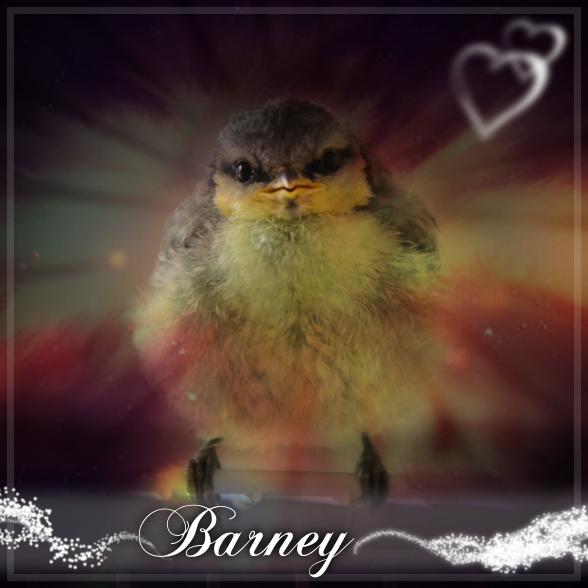 Foto: Barney