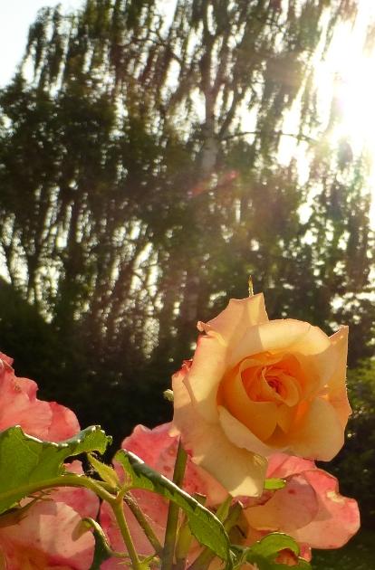 Foto: Blumen 2