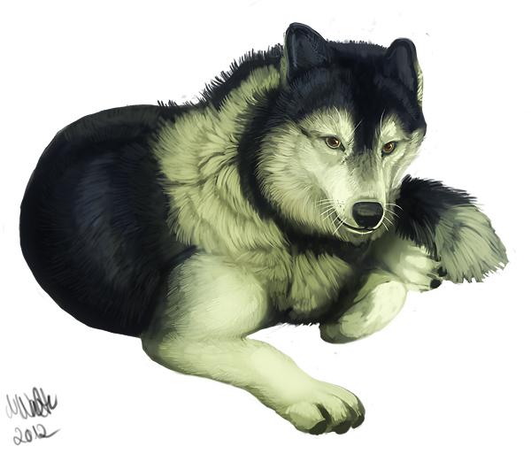 Pokémon-Zeichnung: Malamute-Husky-Wolf-Mix :D