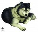 Malamute-Husky-Wolf-Mix :D