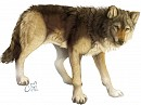Wölfli