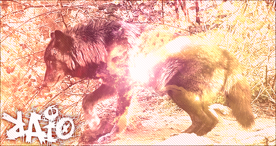 Pokémon-Fanart: RPG Wolf - Raio