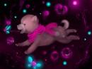 hundchen am träumen :>