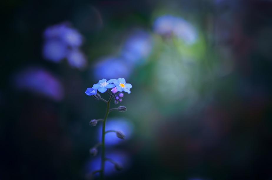 Foto: Colorful Memories.