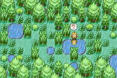 Pokémon-Map: Ein Enton steht im Regen...