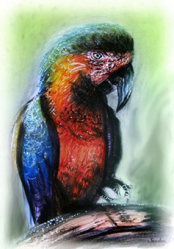 Pokémon-Zeichnung: Papagei