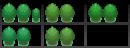 Meine Bäume