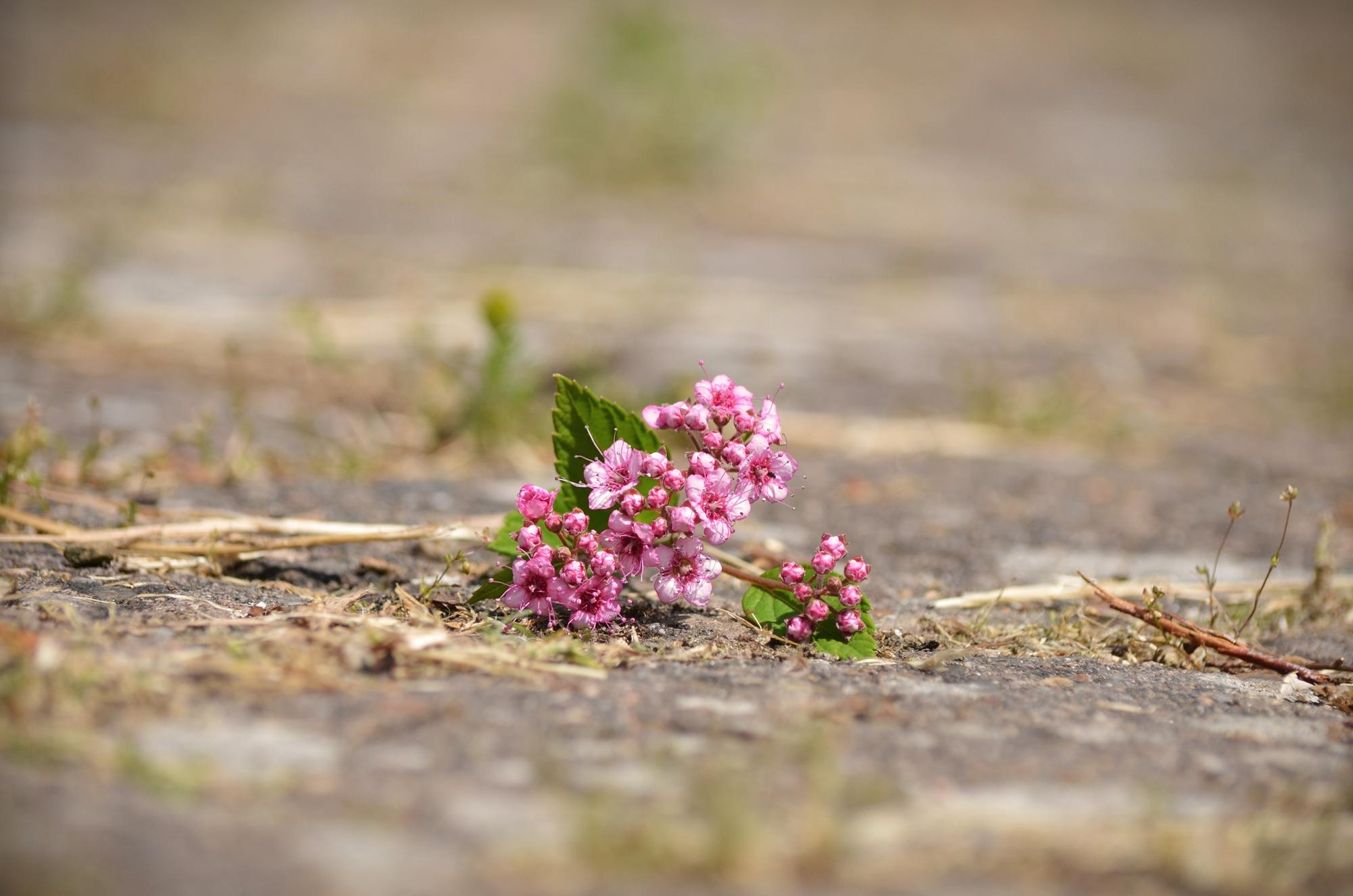 Foto: Einsame Blume