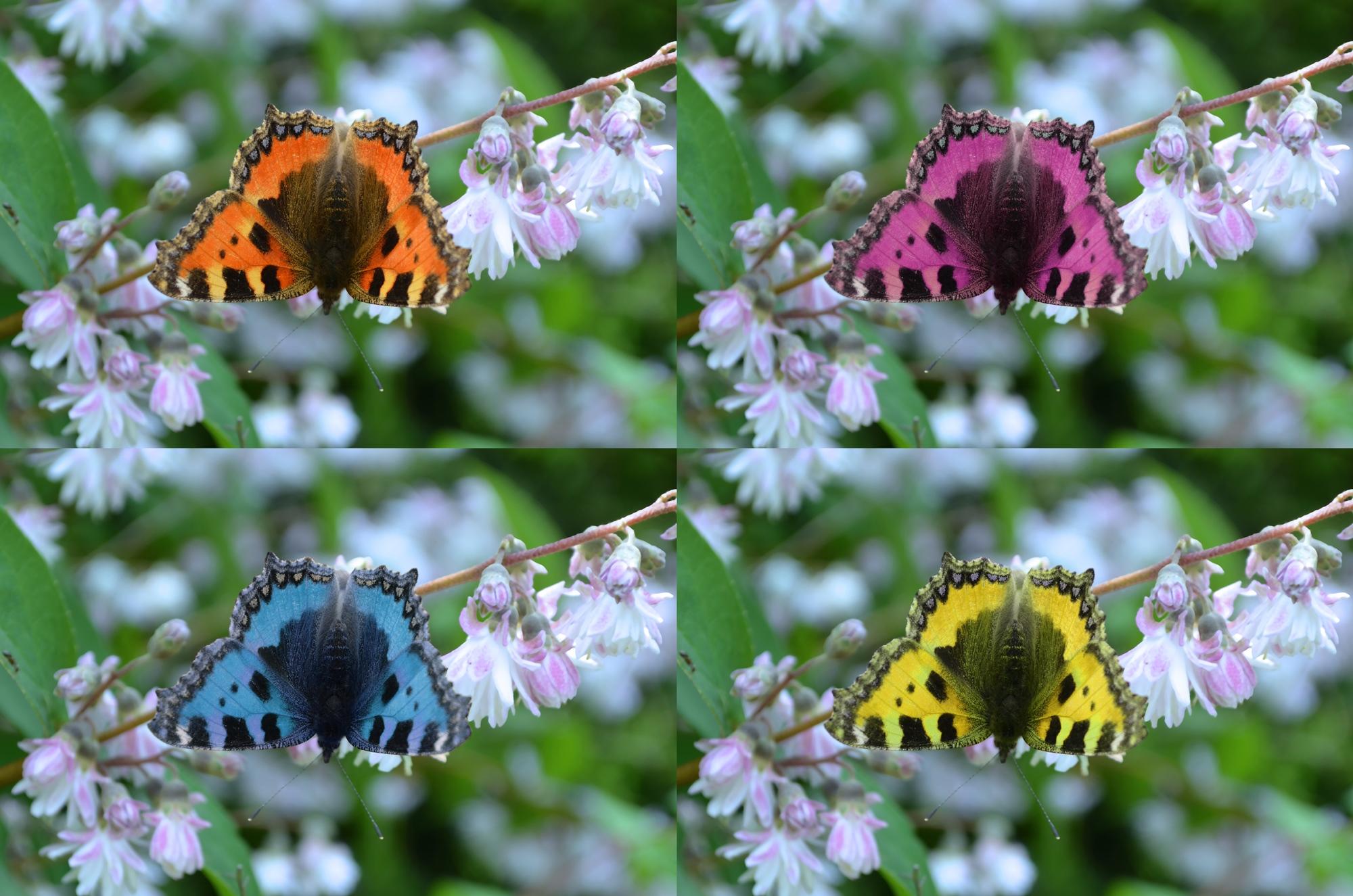 Foto: Vier Farben