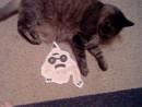 Ganovil und Katze