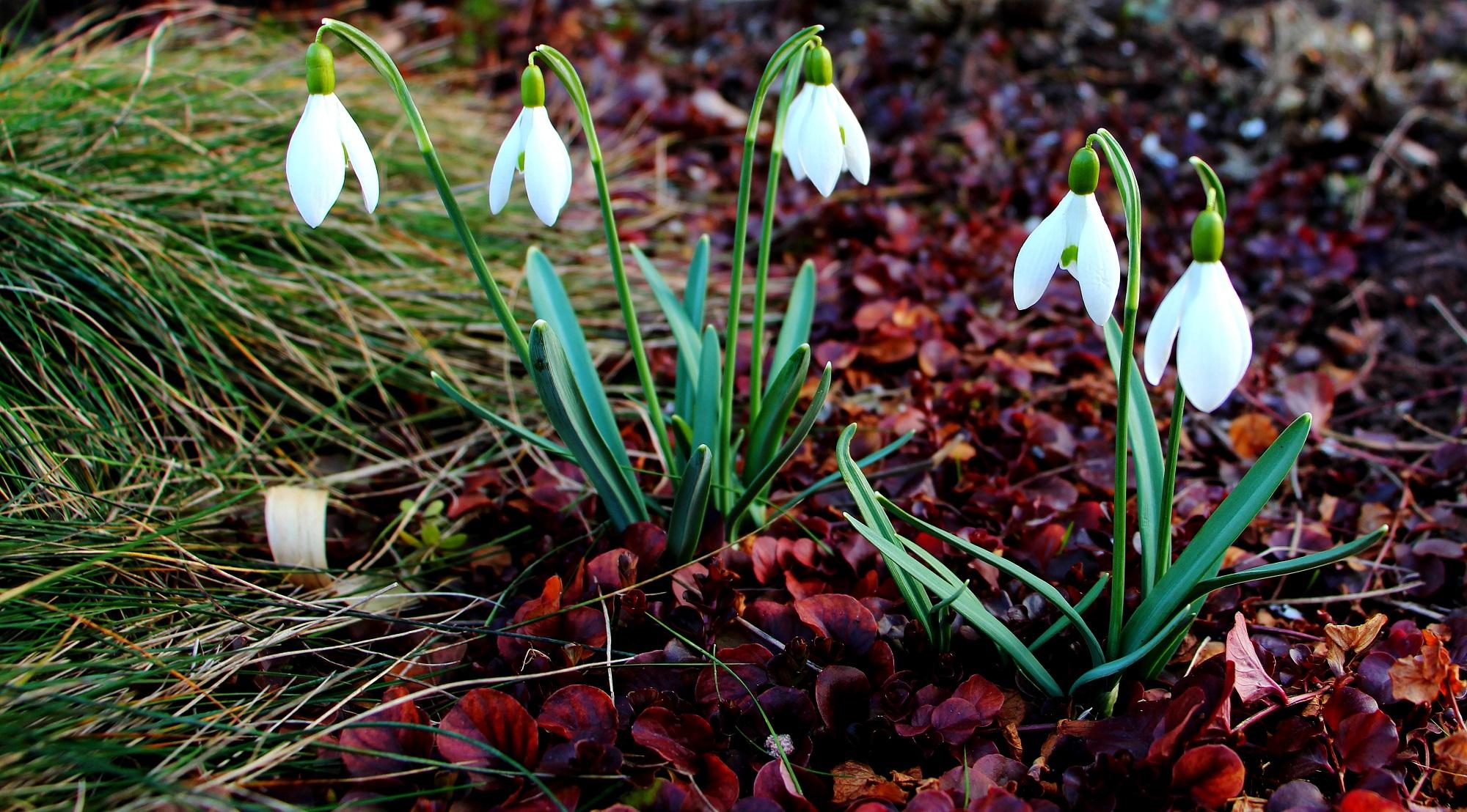 Foto: Frühlingsboten