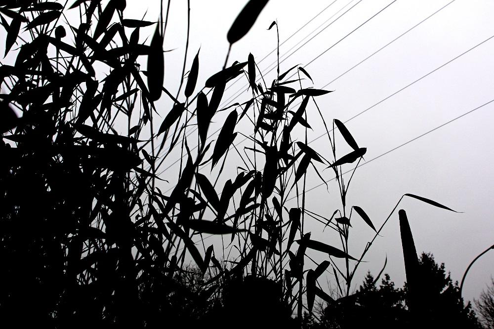 Foto: Black and White