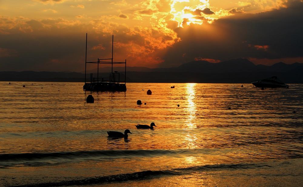 Foto: Schwimmen im Gold