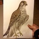 TA Falcon (WIP)