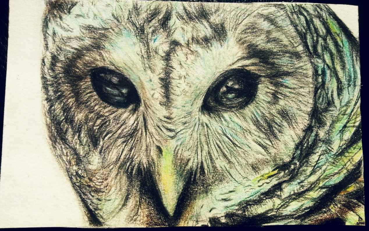 Pokémon-Zeichnung: TA the Owl