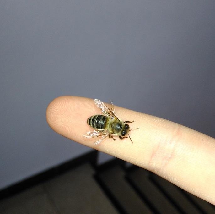 Foto: Biene auf Finger