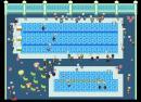 Die Schwimm-Meisterschaft