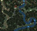 Bird-Forest
