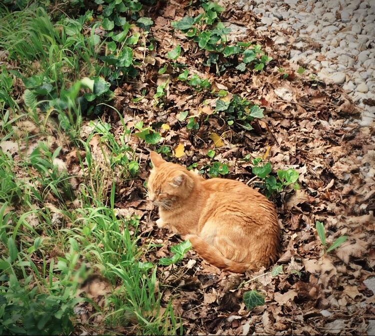 Foto: Campus-Cat