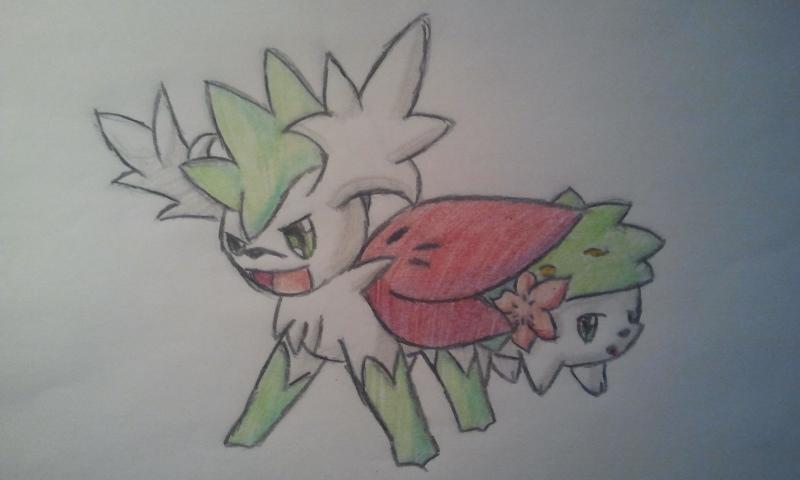 Pokémon-Zeichnung: Shaymin
