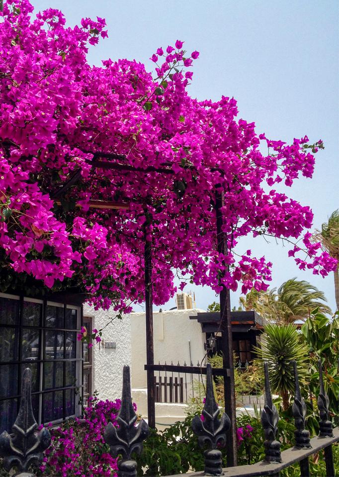Foto: Blütenpracht