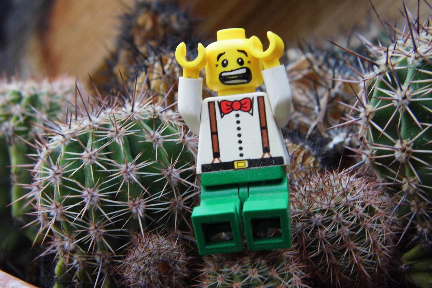 Foto: Mein kleiner grüner Kaktus...