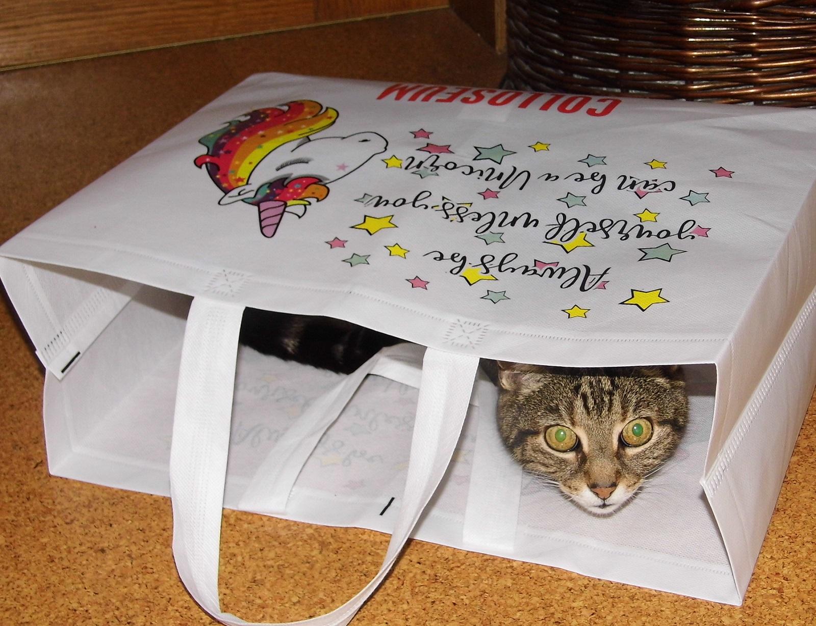 Foto: Die Katze im Sack kaufen? -Voll von gestern! (Oder: Schon wieder ein Katzenbild)