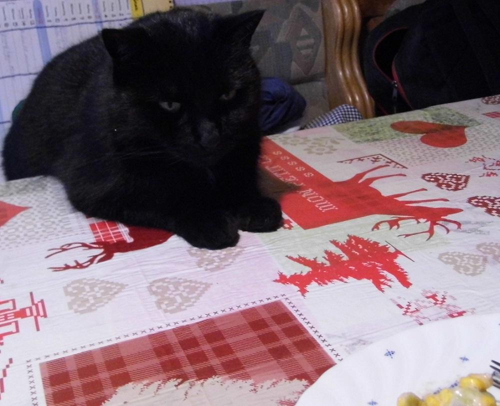 Foto: 'Ich will absolut nichts vom Teller mopsen^^'