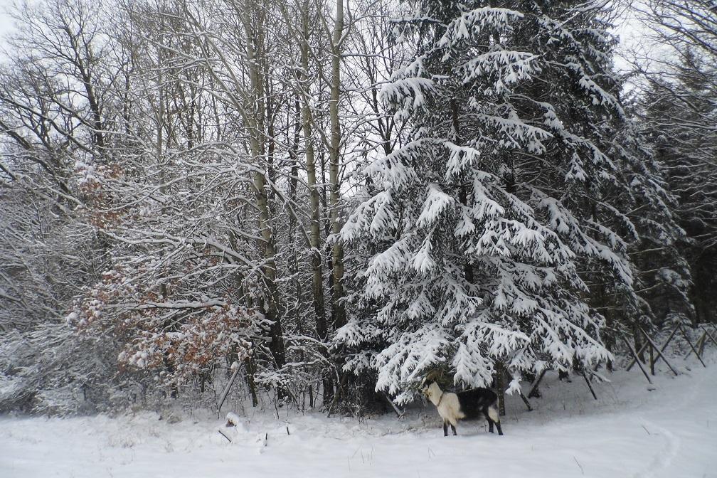 Foto: Winterbild zur Abkühlung (Mit Bärbel :3!)